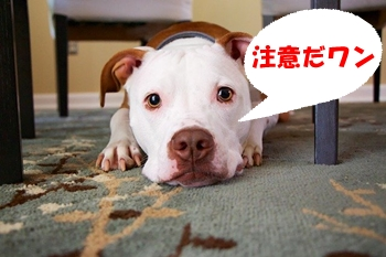 ブリーダーから犬を買う際の注意点