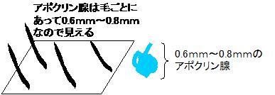 アポクリン腺イメージ