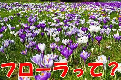 【菌活・腸活の乳酸菌サプリランキング】フローラとはお花畑のこと