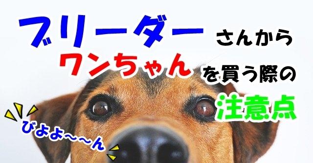 ブリーダーから犬を買う際のメリットや注意点